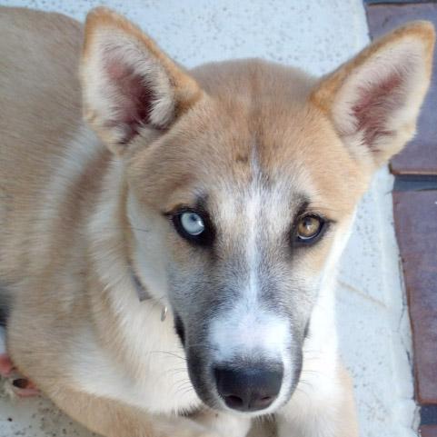 Mary Lou Davidson's dog, Kodiak